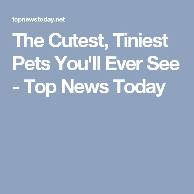 The Cutest, Tiniest Pets You'll Ever See - Top News Today