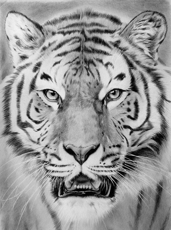 днем тигр тату эскиз картинки выпускать шильды, браслеты