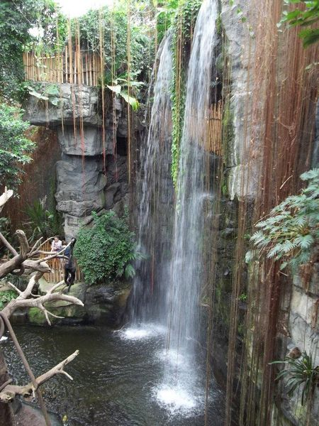 The Lied Jungle is among the exotic sights at Omaha's Henry Doorly Zoo, the top zoo in the U.S., according to TripAdvisor travelers. (A TripAdvisor traveler photo)