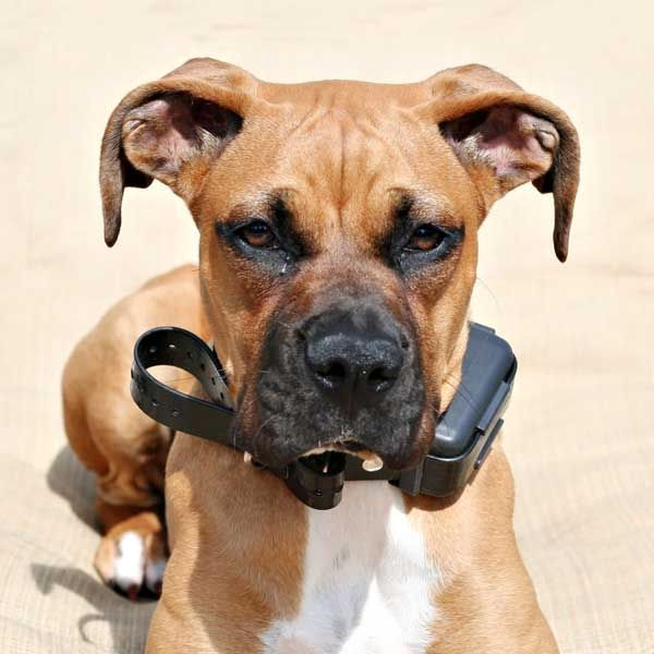 Shock Collars for Dogs? They Don't Work, and Here's Why | Dogster  I don't like shock collars for dogs at all