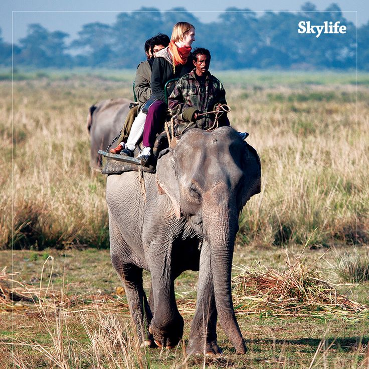 To see the last Indian rhinos and big herds of Asian elephants, we're visiting Kaziranga.