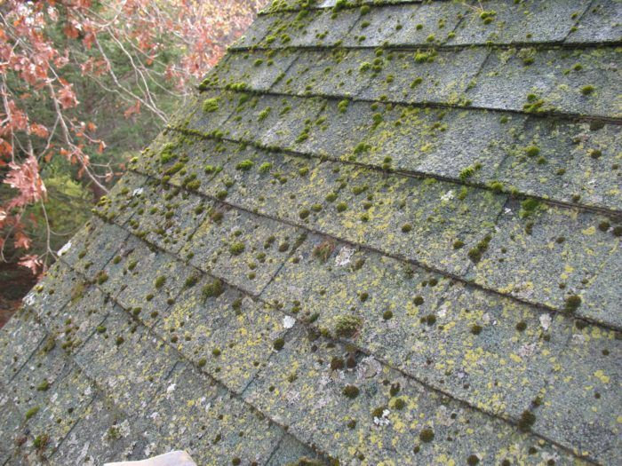 Moss Grows Fast Here In The Pacific Northwest And It Will Ruin Your Roof Roof Maintenance Moss Removal Roof