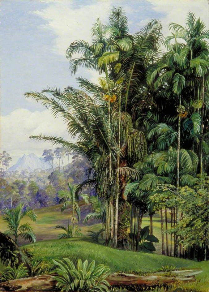 Group of Wild Palms, Sarawak, Borneo - Marianne North