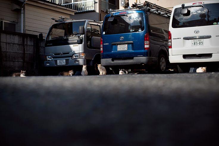 BLOG「路上のルール」 〜東京の街に暮らす野良猫たちの記録写真〜: 集合写真
