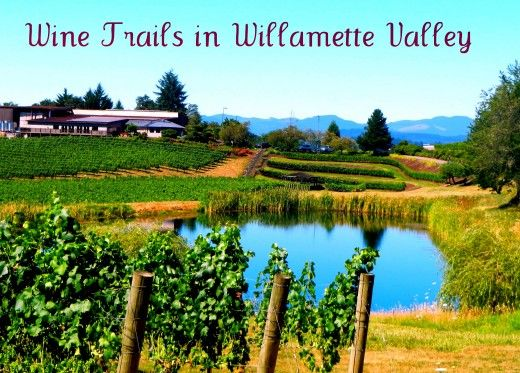 Wine trails in Oregon's Willamette Valley lead to vineyards such as Elk Cove.