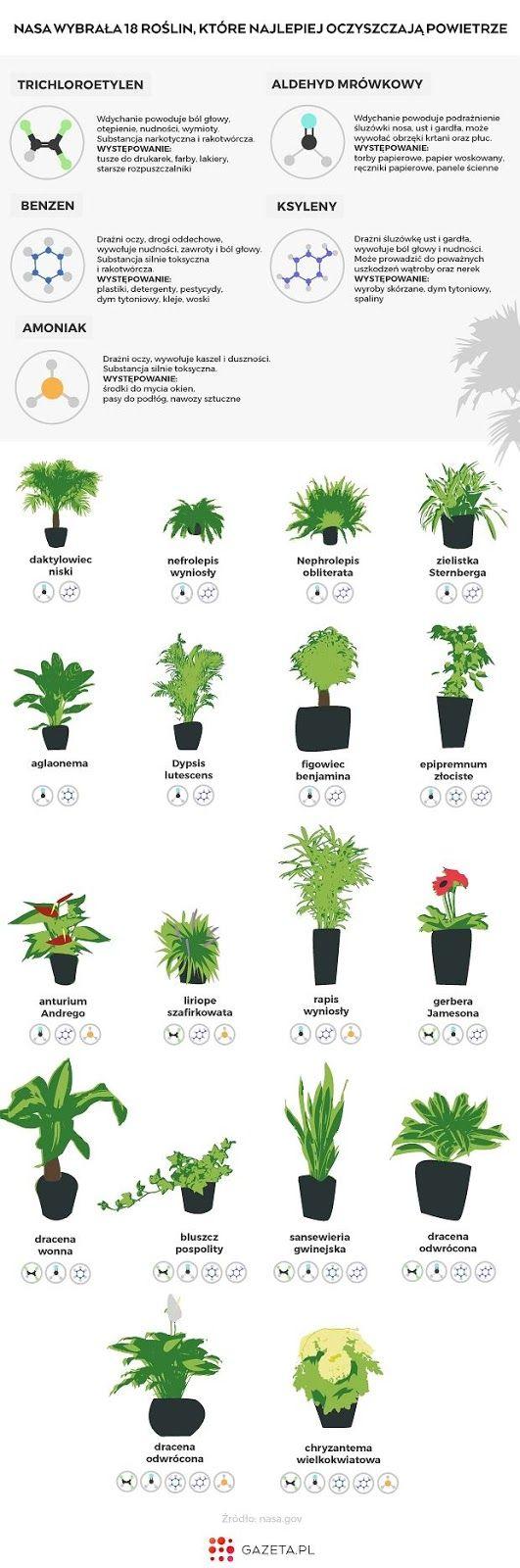 czy rośliny domowe oczyszczają powietrze