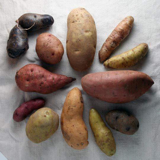 1) Starchy potatoes (russets and many sweet potatoes): Great for baking and frying as they're absorbant.  2) Waxy potatoes (red-skinned and fingerling potatoes): These potatoes are great for soups and salads because they hold their shape so well during cooking.  3) All-purpose potatoes (Yukon Gold, blue, and purple potatoes): Good for roasting, mashing or baking.