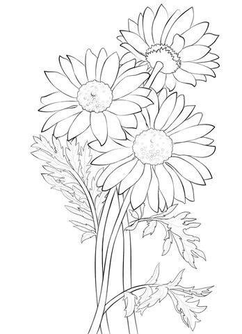 Coloring pages Daisies and Coloring on Pinterest