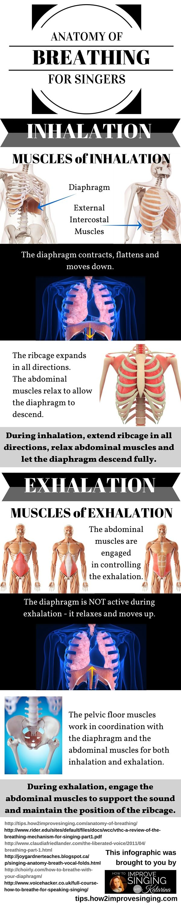 Everything you need to know about the anatomy of breathing for singing.