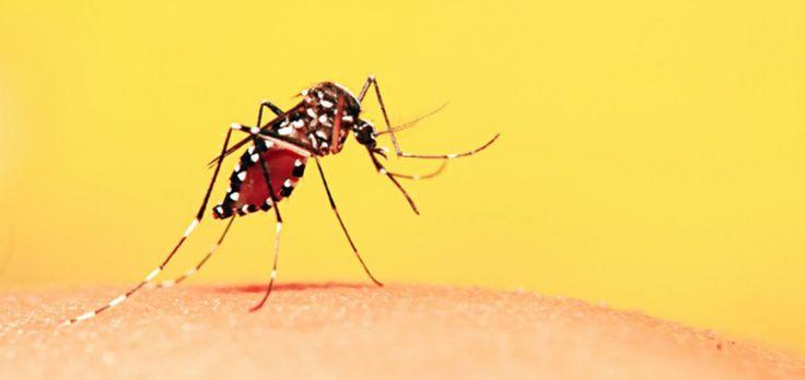 La Organización Mundial de la Salud (OMS) anunció a fines de marzo que había detectado nuevas zonas de riesgo de contagio de fiebre amarilla en Brasil.