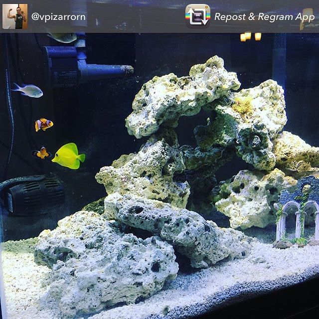 Check out our customer @vpizarrorn recently set up saltwater tank! It looks awesome. Thanks for sharing with us! #TankTuesday #ShowUsYourTanks #swfishgeekgrandrapids