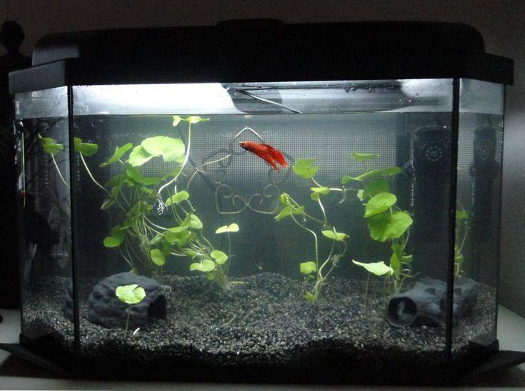 17 best ideas about fish aquarium decorations on pinterest for Cheap betta fish tanks