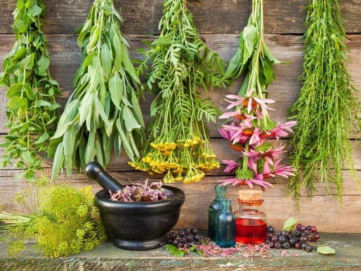 12 Healing Herbs You Need To Grow In Your Medicinal Garden