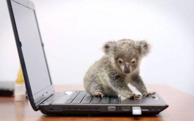 Il mondo ha perso la testa per Raymond, un cucciolo di koala orfano trovato nei pressi di Brisbane, in Australia. Il cucciolo, tanto piccolo da poter stare dentro una tazza, è stato ribattezzato con il nome dell'uomo che lo ha trovato lungo una strada. Solitamente i koala di pochi giorni non sopravvivono lontani dalla madre. In questo caso il piccoletto, inizialmente restio ad accettare il cibo dalle mani dell'uomo, sembra esser ormai fuori pericolo e anzi accetta oramai con piacere le…