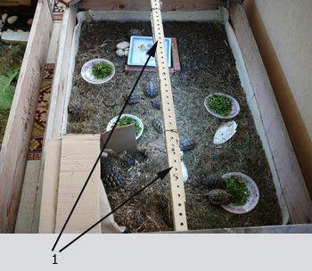 1000 id 233 es sur le th 232 me terrarium tortue terrestre sur terrarium tortue terrarium