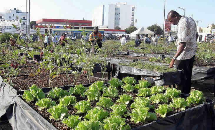 Sénégal: L'horticulture a généré plus de ressources financières que l'arachide selon le ministre de l'Agriculture - 03/12/2014 - http://www.camerpost.com/senegal-lhorticulture-a-genere-plus-de-ressources-financieres-que-larachide-selon-le-ministre-de-lagriculture-03122014/?utm_source=PN&utm_medium=CAMER+POST&utm_campaign=SNAP%2Bfrom%2BCamer+Post
