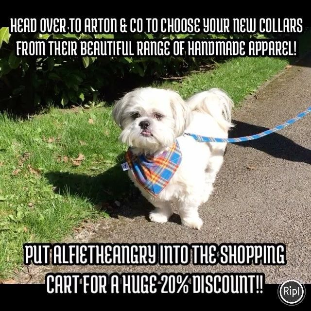 """6 Likes, 1 Comments - Alfie; A Rescued Dog Who Blogs (@alfie_the_angry_shih_tzu) on Instagram: """"#MondayMotivation ...................... Here is a 20% #discount off #dogapparel with code…"""""""