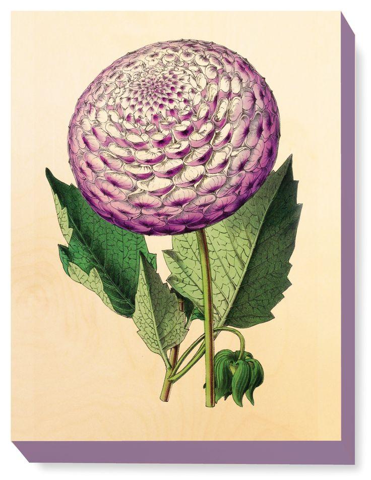 FLW 017 Vintage Flower illustration