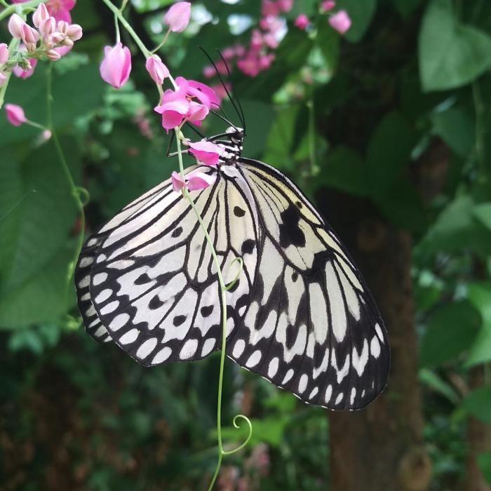 Vlindertuin Vlindorado Waarland