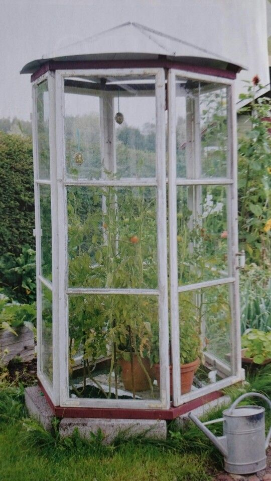 Om det inte blir ett lusthus så kan väl i allafall tomaterna få ett sånt här?
