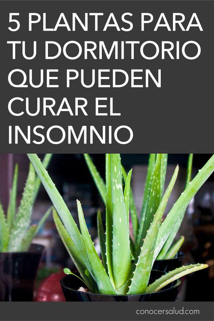5 plantas para tu dormitorio que pueden curar el insomnio
