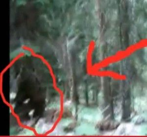Slovenian Bigfoot Video - Was Bigfoot Caught on Tape in This Footage?