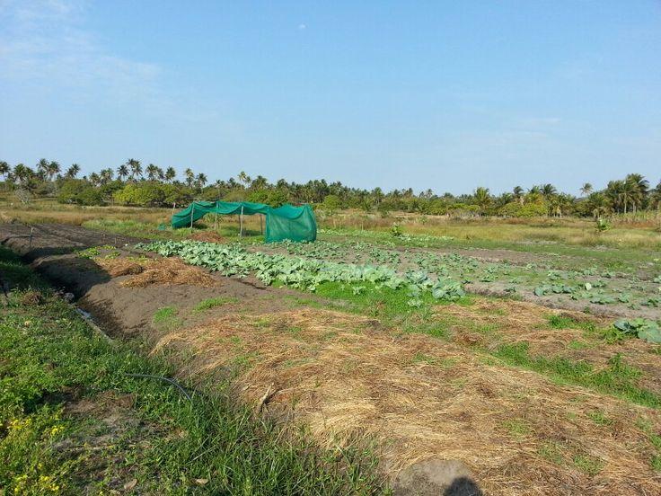 Inhambane farming