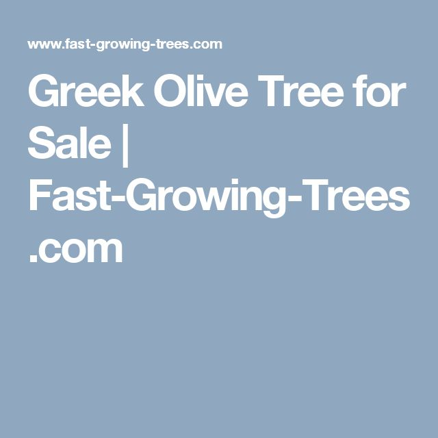 Greek Olive Tree for Sale | Fast-Growing-Trees.com