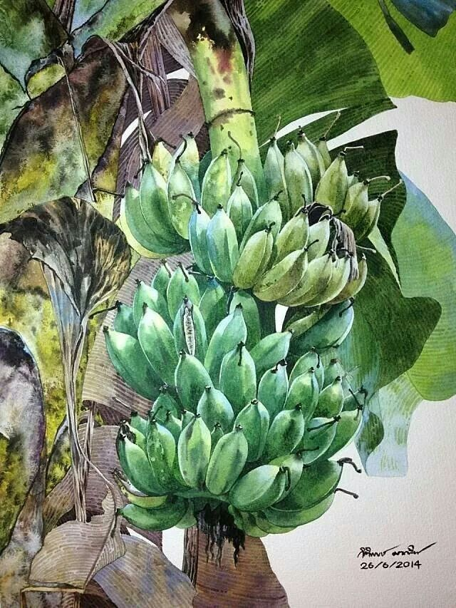 Banana by Ti Watercolor