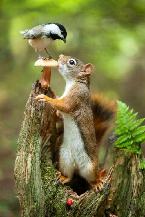 Tierfreundschaft - Vogel und Eichkatzal