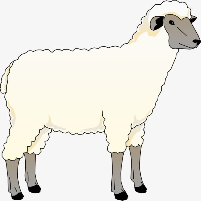 Young Sheep Sheep Illustration Sheep Art Cartoon Clip Art