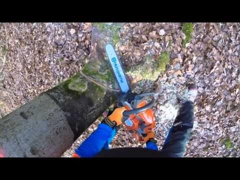 Amazing Die Baumf llung ist eine der gef hrlichsten Arbeiten im Wald Dieser Film hilft Ihnen bei der richtigen Vorbereitung der Holzernte und gibt Ihnen eine
