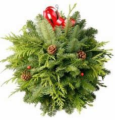 Have you ever seen a Christmas kissing ball? These decorated balls of evergreens, holly and herbs hang over doorways during the Christma...