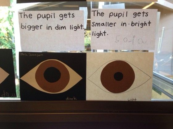 Love this!  :)  Parts of the Eye Art Project for Preschoolers