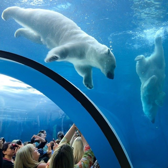 Journey to Churchill exhibit at Assiniboine Park & Zoo in Winnipeg.   Photo via Instagram: @lovethywalrus — with Marcus Vinicius and Aryan Mehta.