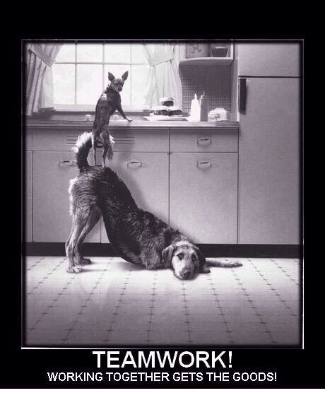Teamwork Cat Standing On Dog Funny Art amp Quotes
