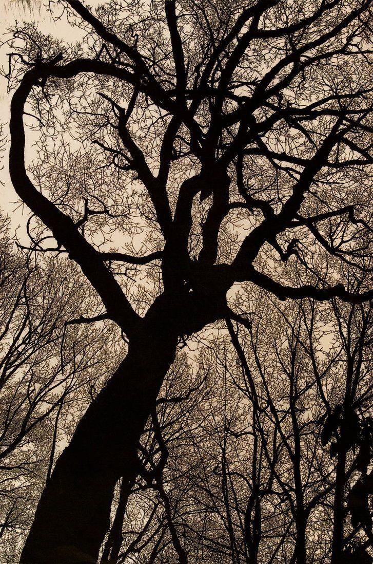 """Night Descends on the Mountain"" linocut by Hannah Skoonberg. 24""x36"" www.skoonberg.com . Tags: Linocut, Cut, Print, Linoleum, Lino, Carving, Block, Woodcut, Helen Elstone, Trees, Silhouette."