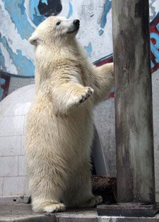I want to see the baby polar bears at the Louisville Zoo so badly!!!