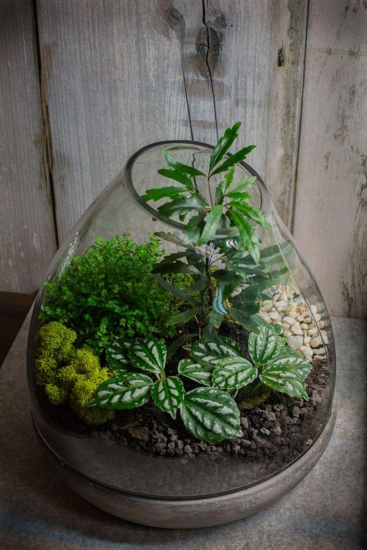 Indoor Rock Garden 17 Best Shaniel Terrarium Project Images On Pinterest Terrarium
