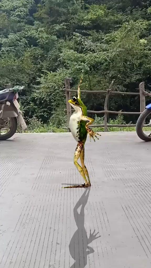 Der Froschtanz wie dieser ist sehr aufregend.
