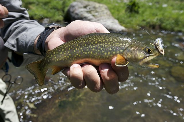 How to fish a mountain stream   Tips from Orvis