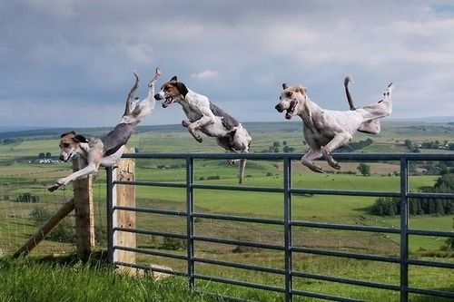 Flying pups