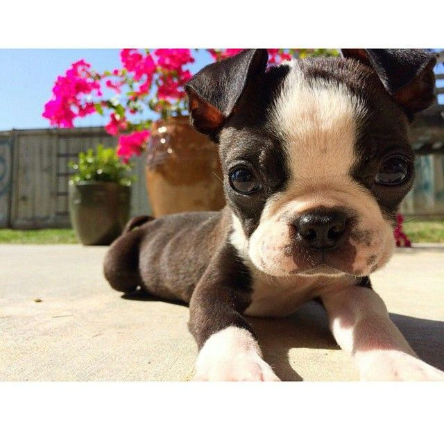 Cutest little face