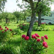 Stellplatz: Großzügige Wohnmobilstellplätze auf der Obstwiese vor dem Campinggelände mit schönen Blumenrabatten .