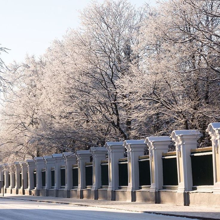 №9 -199 ♥  Петергофский парк сейчас нежный снежный. Всегда ждём!❄️  Peterhof park is white and snowy. Always welcome!❄️  #parkday #деньпарков
