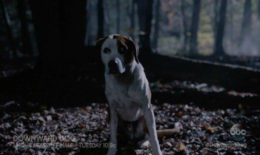 getting lost, downward dog, tv show, comedy, drama, season 1, finale, review, abc