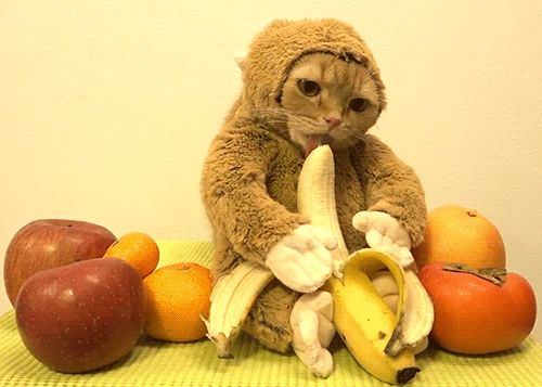 Because who doesn´t love a cat in a monkey suit licking a banana while surrounded by assorted fruit?