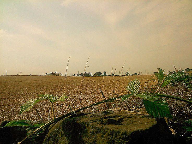 Walk behind Liversedge Cemetery