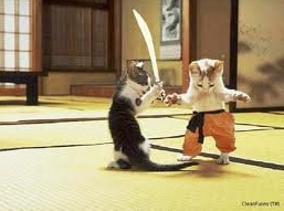 manu cat and bablu cat in the final of sword fighting