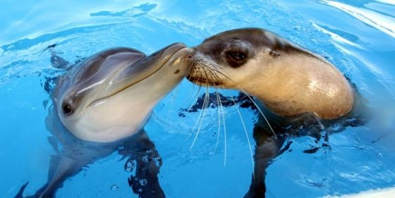 Seal dolphin kiss: Seals, Kiss, Animals, Best Friends, Pet, Friendship, Odd Couple, Animal Friends, Baby Dolphins